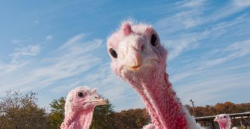 Turkeys, Stuffing and Content Marketing
